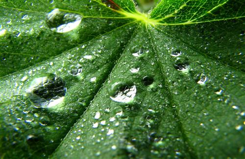 Water Drops on Leaf 3D